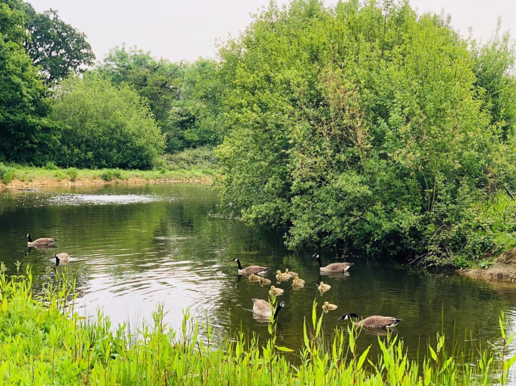 Roebeck Country Park, Isle of Wight